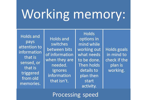 Diagram of key processesinvolved in working memory